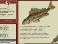 Ключ активации для русской рыбалки