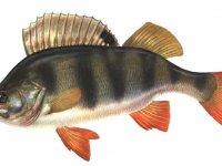Русская рыбалка 2.4 секреты