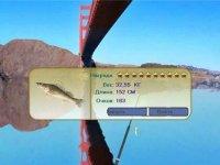 Русская рыбалка 1.6 секреты