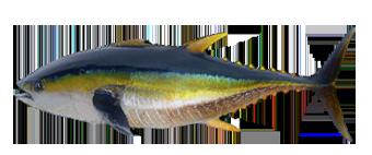 Клевалка Русская Рыбалка 3.7