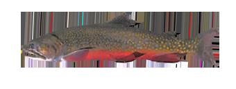 лабынкыр виды рыб рыбалка 3